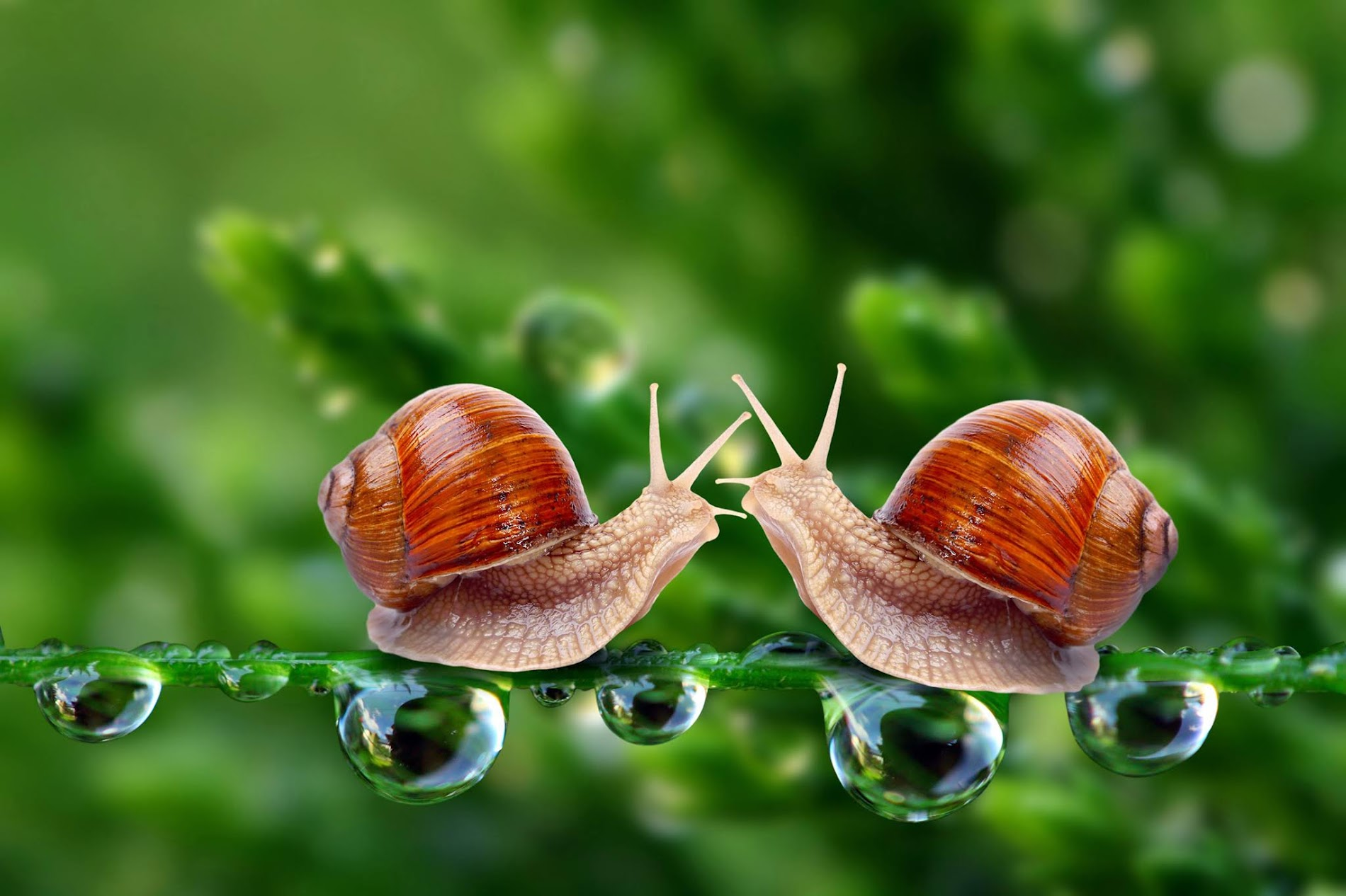 Snails HD Wallpaper
