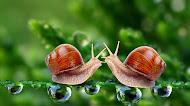 Snails HD Wallpaper