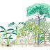 Sistemas Agroflorestais: cultivando com resiliência