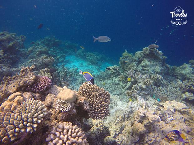 cosas que no sabias sobre las islas Maldivas arrecife