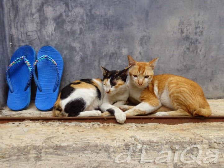 kucing (1)