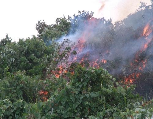 cháy rừng Nam Hải Vân trưa 19-8