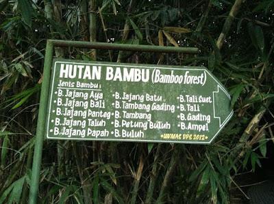 hutan bambu desa panglipura