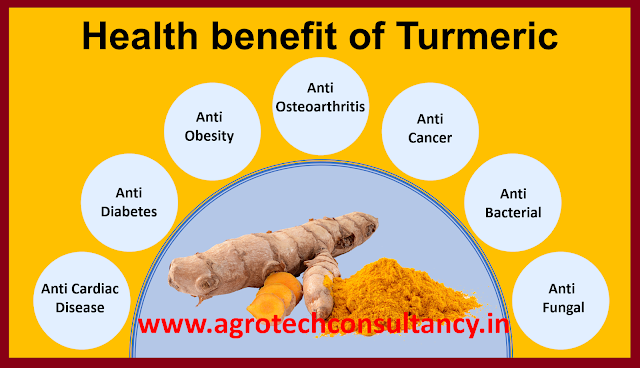 Health Benefit of Turmeric / Haldi, Turmeric, turmeric powder, turmeric benefits, health benefits of turmeric, curcumin benefits, turmeric uses, haldi benefits, curcuminoids, turmeric benefits for skin, turmeric medicinal uses, turmeric price, turmeric plant, turmeric side effects, turmeric water benefits, turmeric tablets, turmeric supplement, turmeric root, turmeric curcumin, turmeric capsules, turmeric extract, curcumin supplement, turmeric spice, ground turmeric, turmeric vitamins, turmeric powder benefits