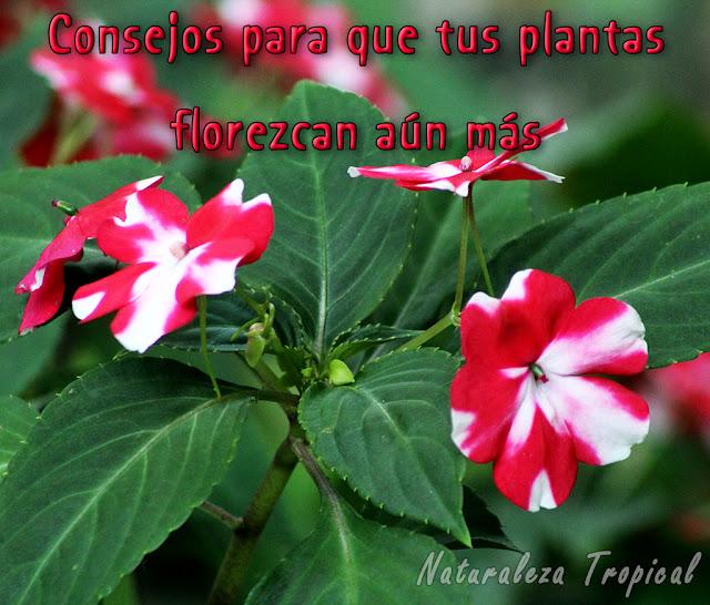 8 consejos para que tus plantas florezcan con más fuerza y durante más tiempo