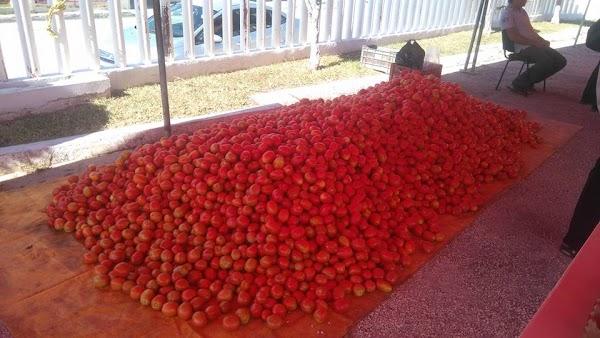 Agricultor vende el kilo de jitomate en 5 pesos, sin intermediarios DIFUNDE!!!.