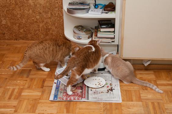 kissanruuan tuoteseloste