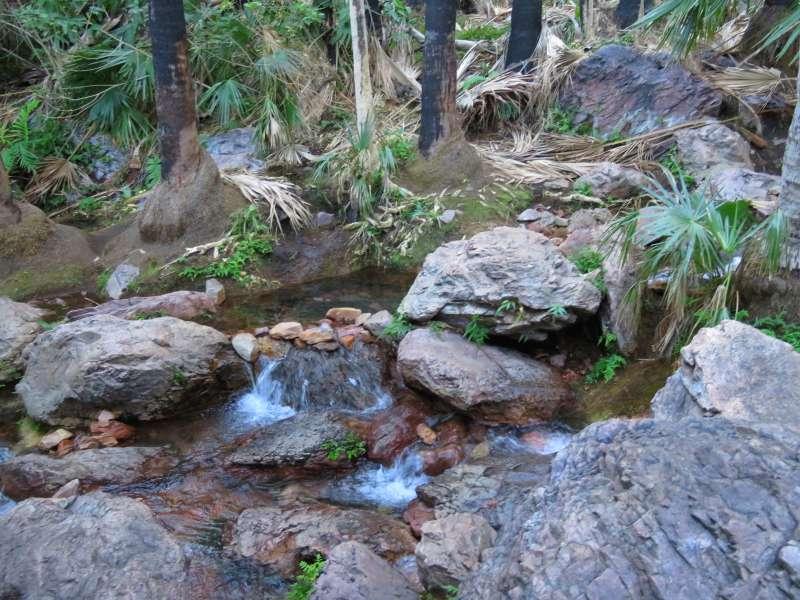 Zebedee Springs
