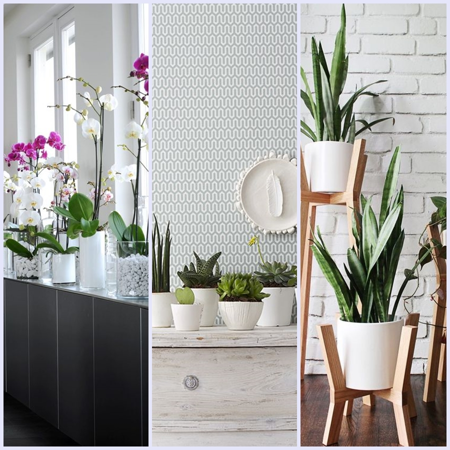 Encha a casa de flores ou plantas.