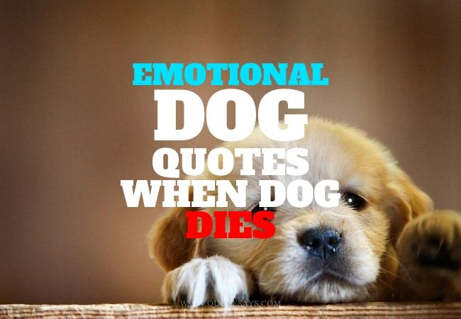 Dog Quotes When Dog Dies,  Dog Quotes When Dog passes away, emotional dog quotes