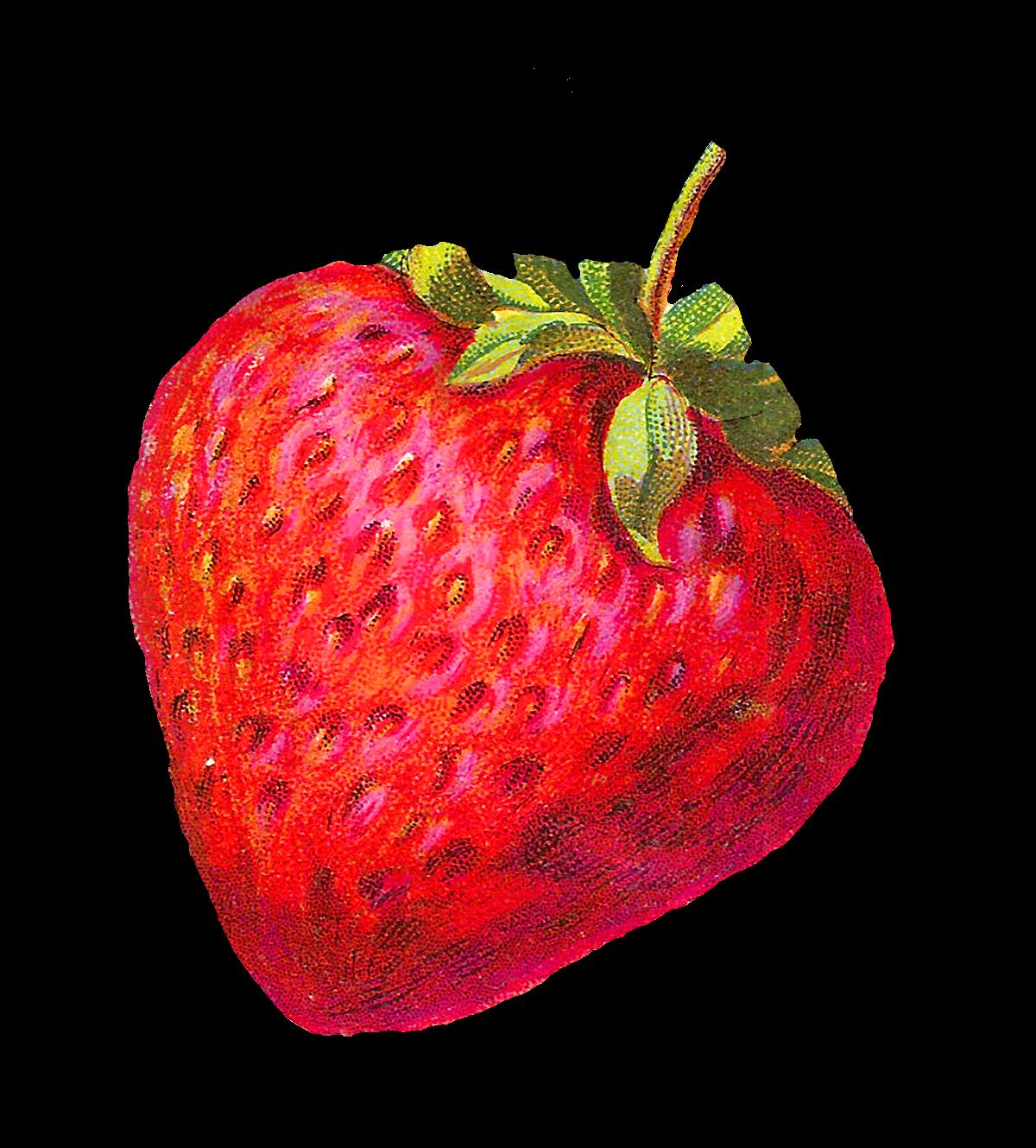 Antique Images Digital Strawberry Clip Art Berry Fruit