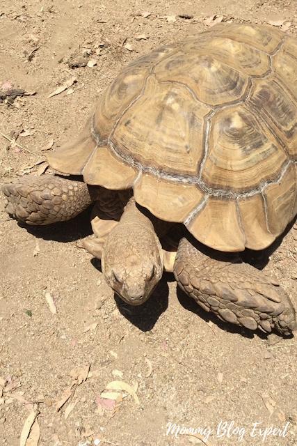 Tortoise Town at Reptacular