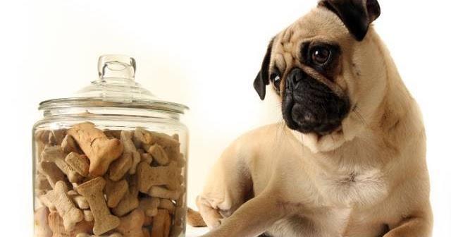 Handmade Dog Treats Uk Private Label