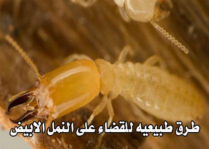 طرق القضاء على النمل الابيض
