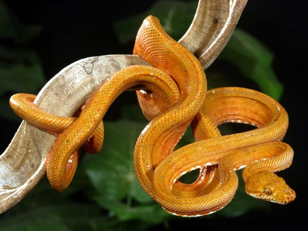 Amazing World: The World's Most Colorful Snakes - part 3