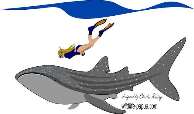 Vector illustration of whaleshark