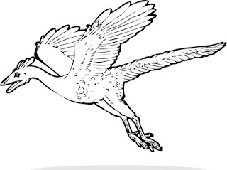 Archaeopteryx Coloring Pages Dinosaur