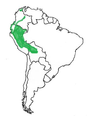 Coendou bicolor map