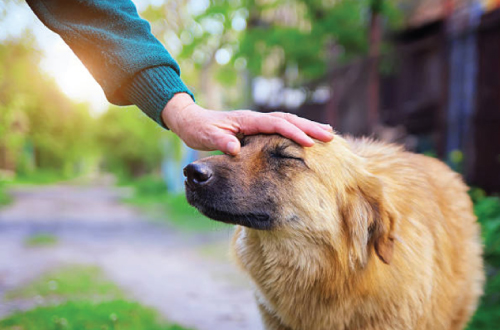 hand patting dog on head