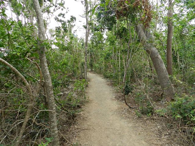 isola whitsunday vegetazione australia