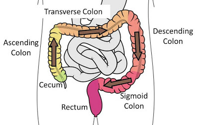 Path of poop through the colon.