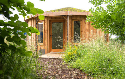 Shedworking How To Look After The Green Roof On Your