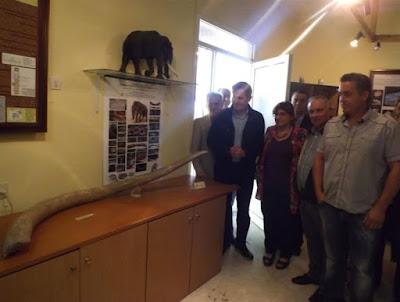 Μοναδικός για τα ελληνικά δεδομένα ο χαυλιόδοντας του Μαμούθ στην περιοχή των Καλινδοίων