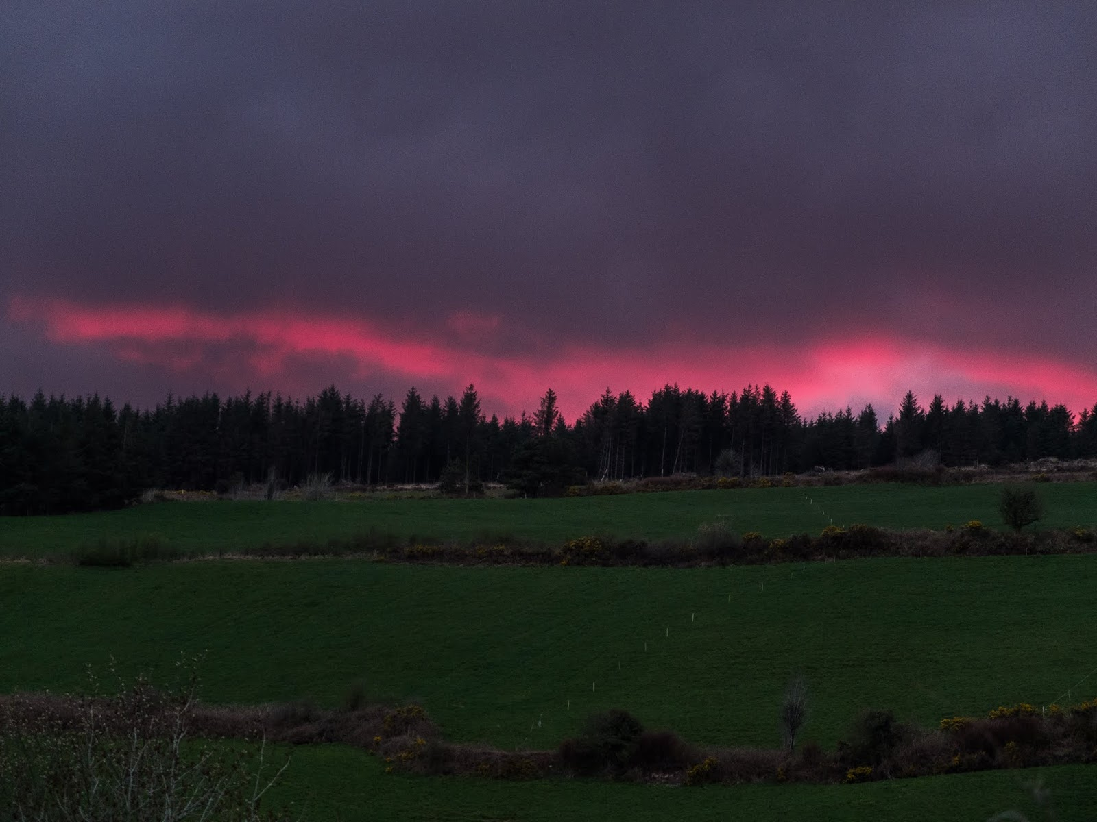 A pink ribbon of light in dark clouds after sunset over a forest on a hillside.