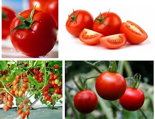manfaat buah tomat bagi ibu hamil