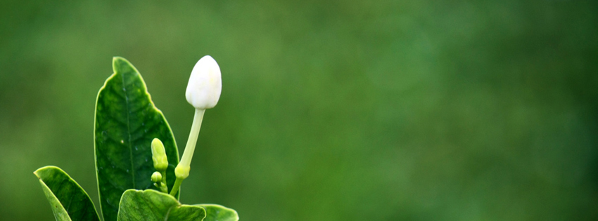 Facebook Cover Photos [Banner] | Free Download: Flowers in Green ...