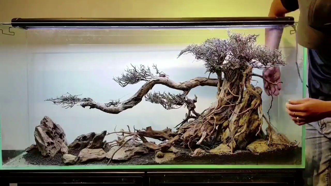 Contoh dan Referensi Desain Aquascape Bonsai Terbaik