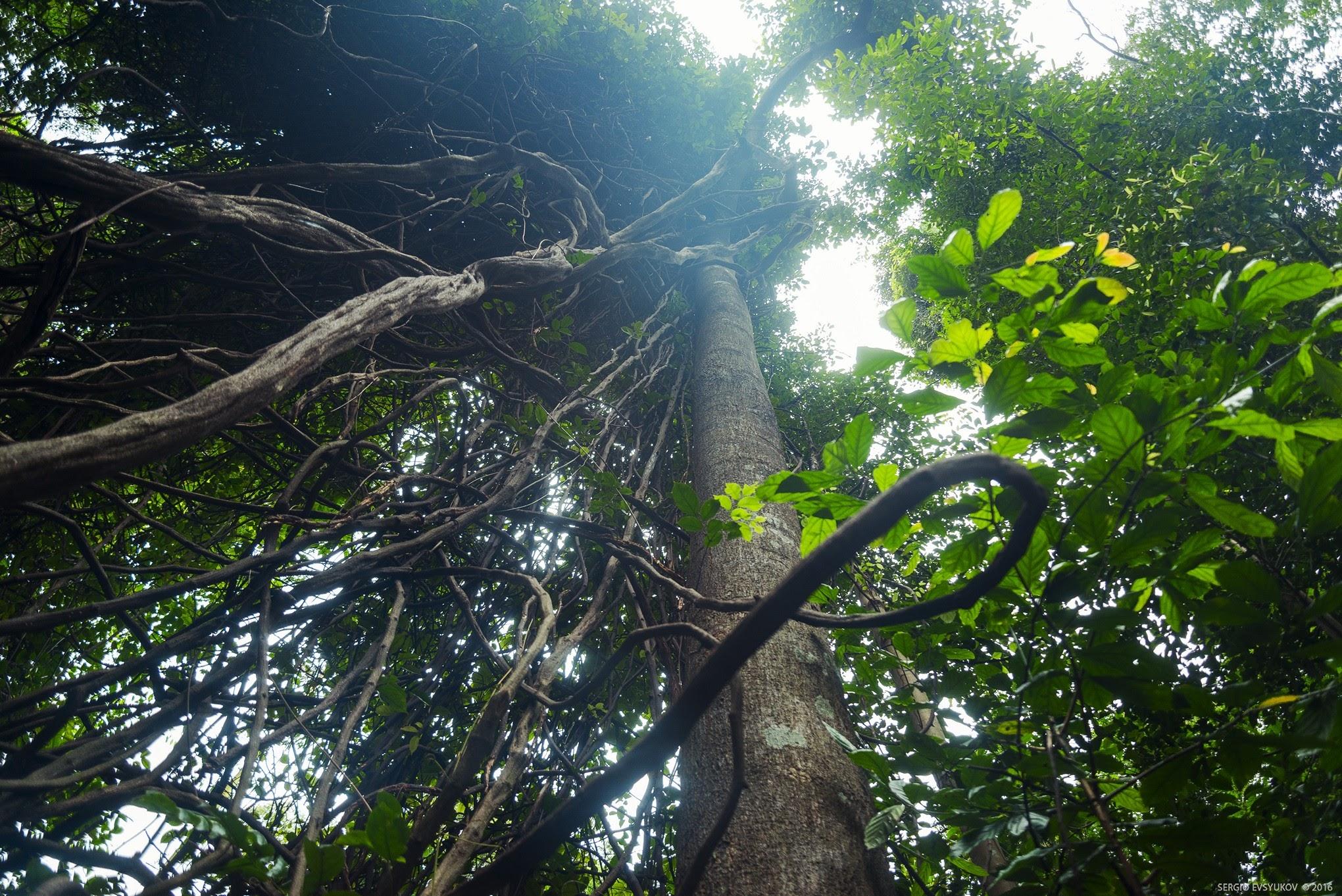 Сингапурские джунгли