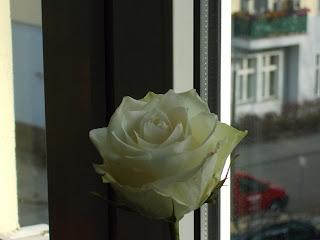 kaipuun_valkoinen_kukka