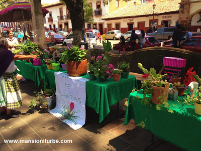 Plant Exchange in Patzcuaro