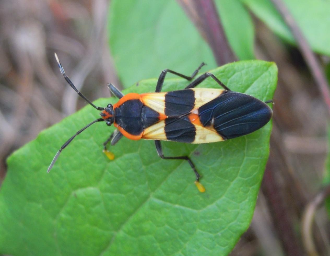 FishnDave: Backyard Bug Pics