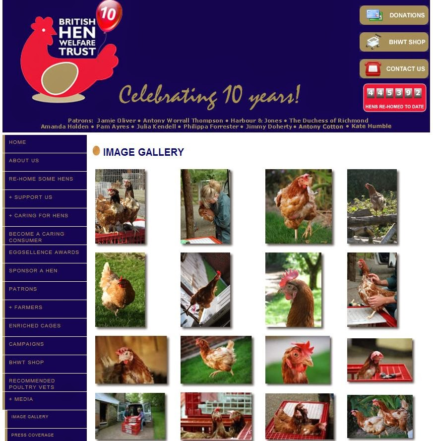 Screengrab of the British Hen Welfare Trust, a battery hen rescue and re-homing organization in the United Kingdom. From these photos it is clear that the birds are not featherless.