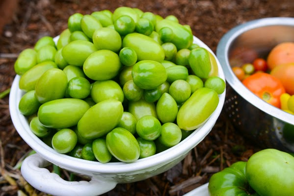 4 formas de madurar tomates verdes