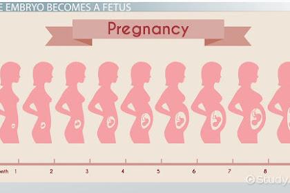 Kalkulator Usia Kehamilan Manual dan Otomatis