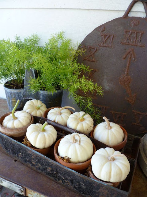 These mini white pumpkins in flower pots are a cute outside fall decor element.