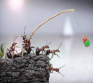螞蟻的啟示