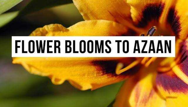 एक खास आवाज़ सुनकर ही खिलता है ये अनोखा फूल