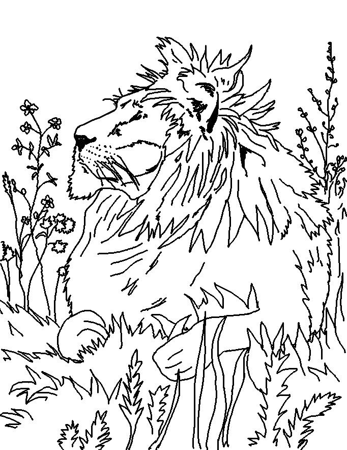 Coloring Page World: Lion (Portrait)