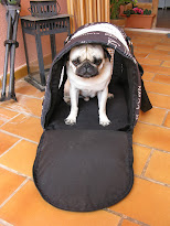Pepito in his transporte bag