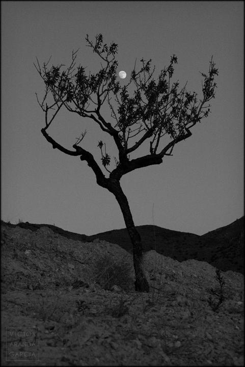 fotografia,almendro,arbol,luna,rincon_de_sumiedo,murcia,naturaleza