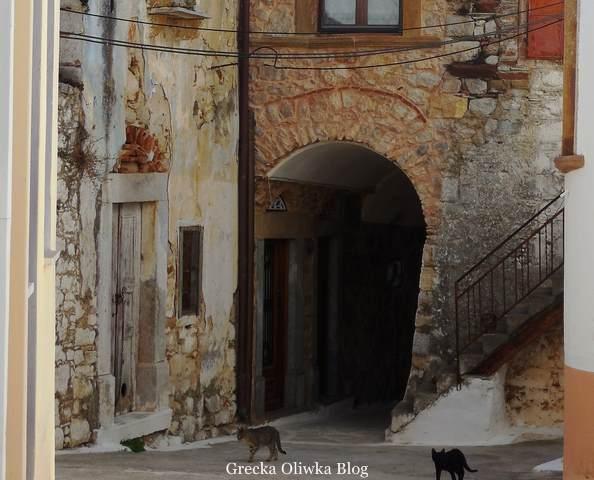 przed wejściem do średniowiecznego budynku dwa żywe koty czarny i szary