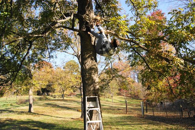 Pecan tree.   www.thekitchenismyplayground.com