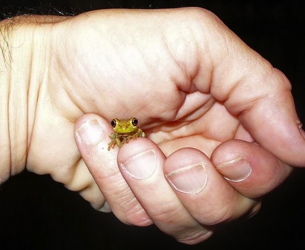 tinny animals on fingers6