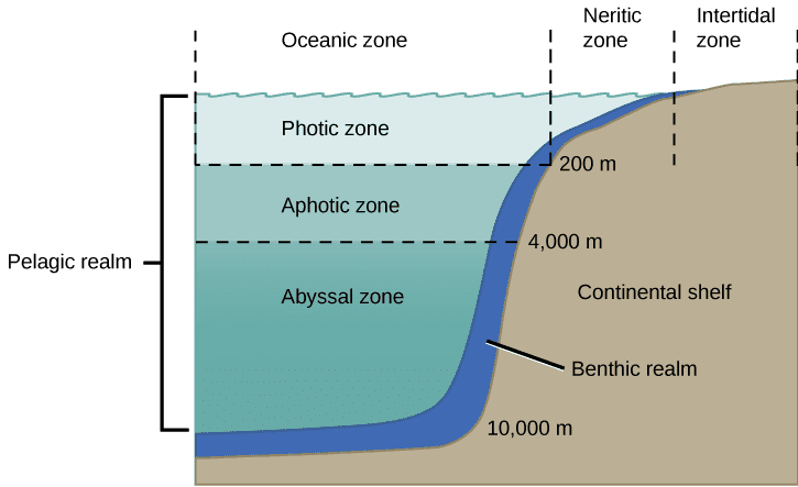 Rariphotic Zone off the coast of Bermuda