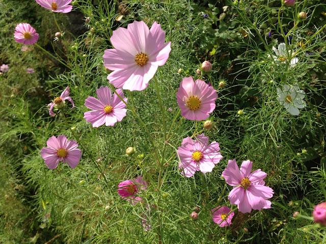 イメージ画像:花