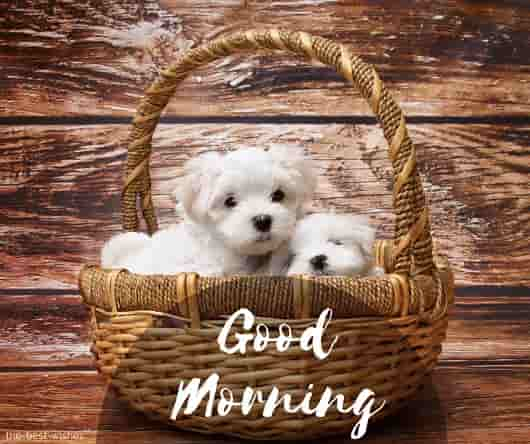 good morning with cute puppies